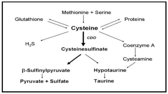 l cystine là gì